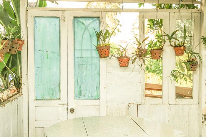 Post billede 5 typiske problemer med indendørs haver Bakterier og sygdomme - 5 typiske problemer med indendørs haver