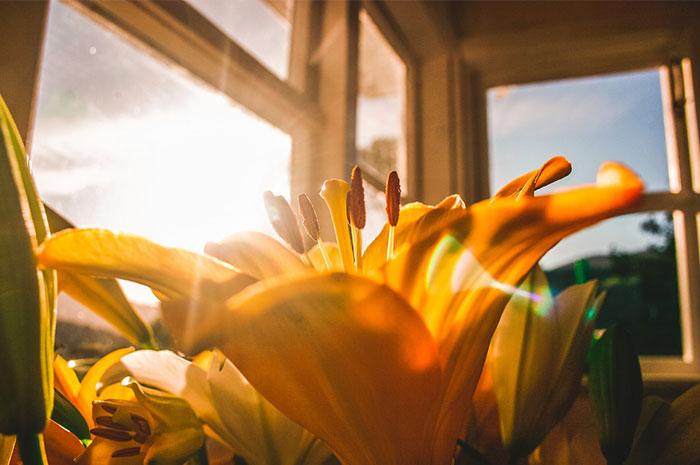 Post billede 5 typiske problemer med indendørs haver Utilstrækkeligt lys - 5 typiske problemer med indendørs haver