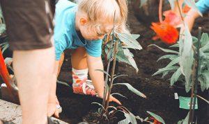 Post billede 6 tips at holde haven sund Hold haven ren 300x179 - Post-billede-6-tips-at-holde-haven-sund-Hold-haven-ren