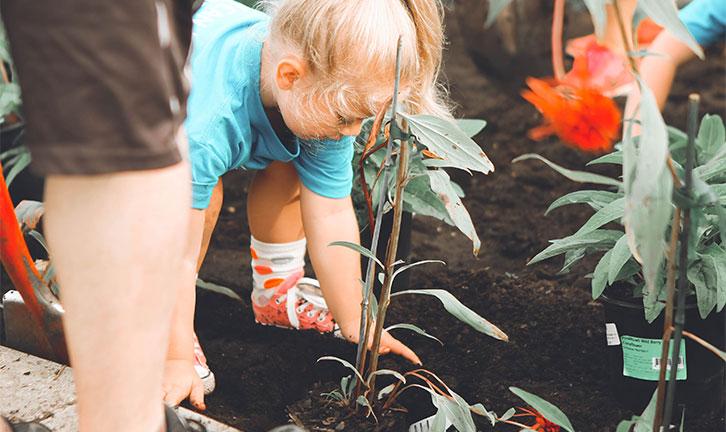 Post billede 6 tips at holde haven sund Hold haven ren - 6 tips at holde haven sund