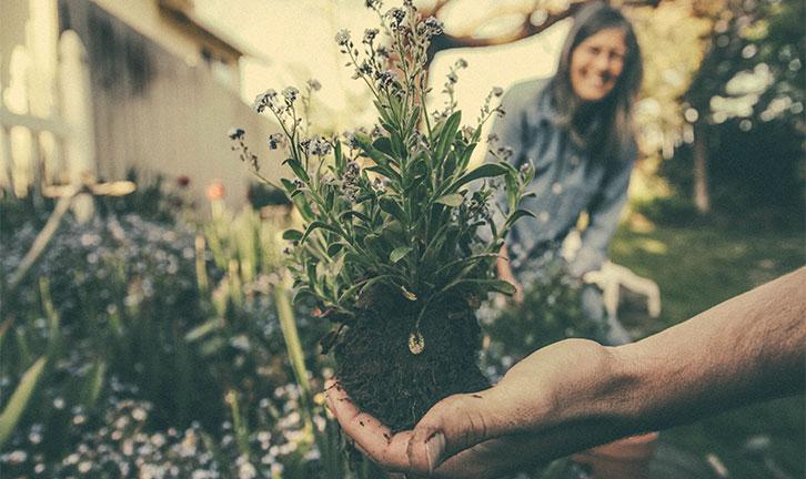 Post billede 6 tips at holde haven sund Undersøg planterne inden du køber - 6 tips at holde haven sund