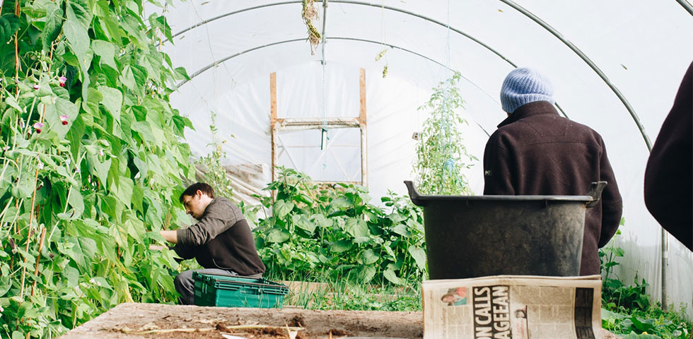 5 grunde til at anlægge en have