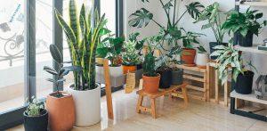 Udvalgt billede 5 typiske problemer med indendørs haver 300x147 - Udvalgt-billede-5-typiske-problemer-med-indendørs-haver