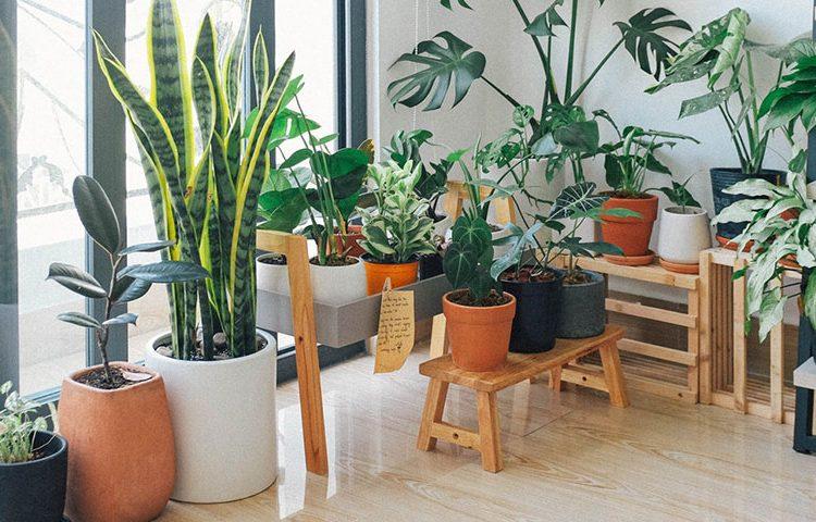Udvalgt billede 5 typiske problemer med indendørs haver 750x480 - 5 typiske problemer med indendørs haver