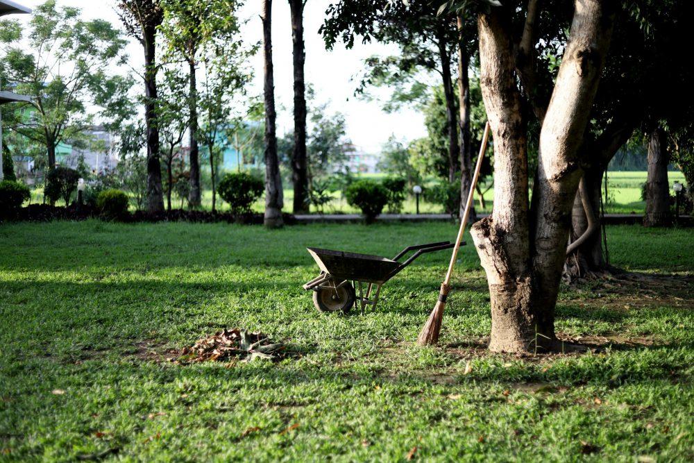 Brug for hjælp til at fjerne træstubbe i haven