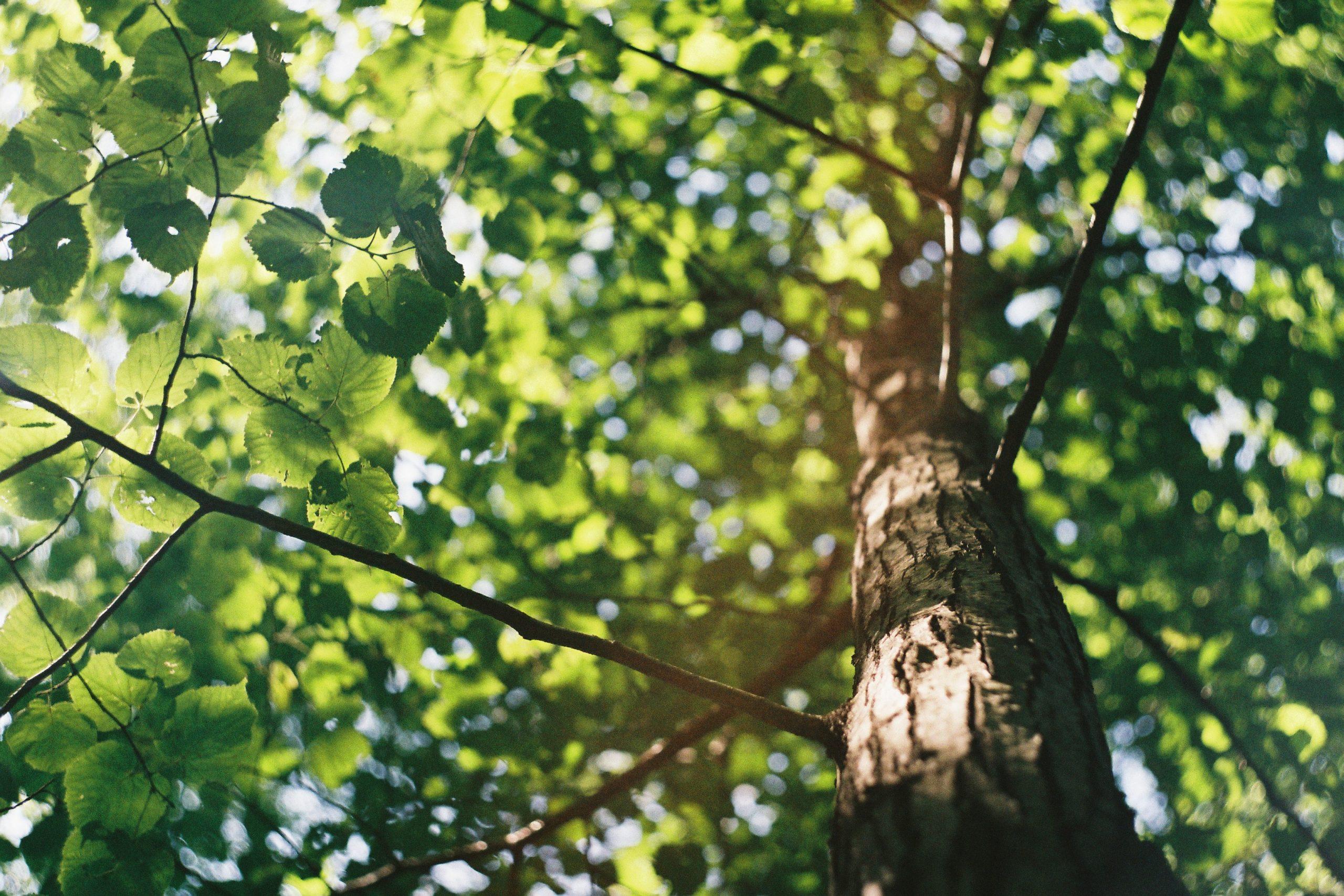 Få billig hjælp til at fjerne trærødder efter fældning