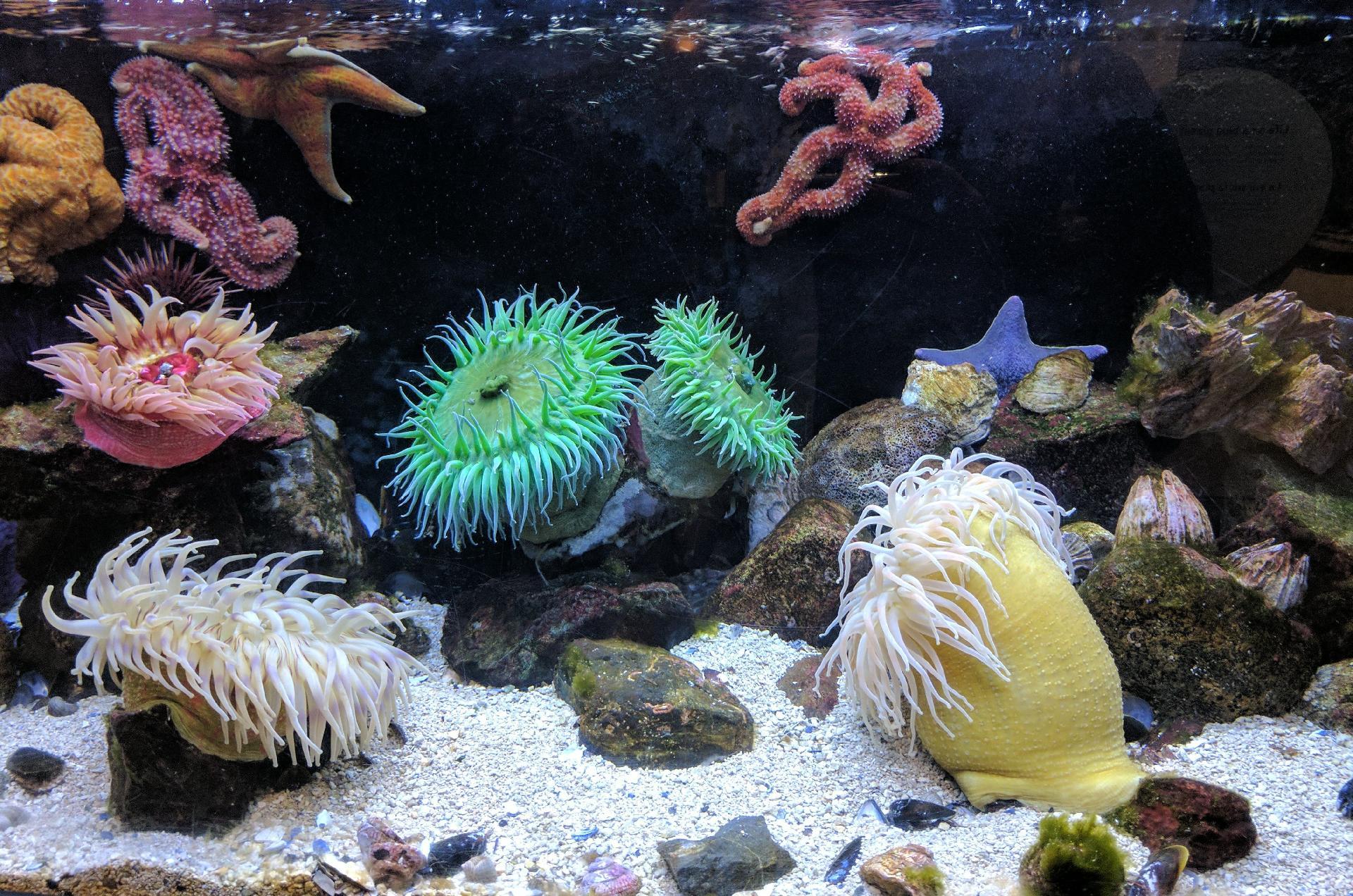 jumpstory download20200527 074435 - Find det bedste tilbehør til dit akvarie