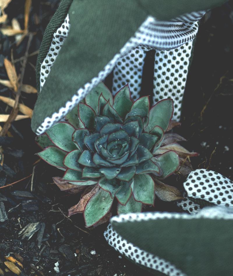 gardener 17 - Om
