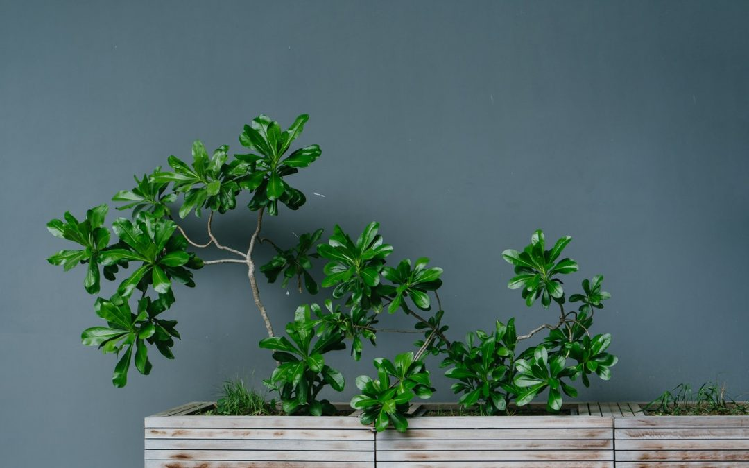 Hvilken slags plantekasse skal jeg vælge til min altan?